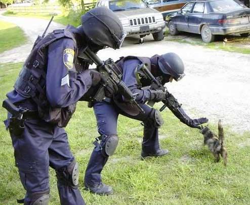 Attackcat